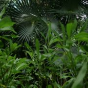 Mexcican-cancun-nature-grass-palms-herbs-view-in-4K_001 National Footage