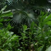 vj video background Mexcican-cancun-nature-grass-palms-herbs-view-in-4K_003