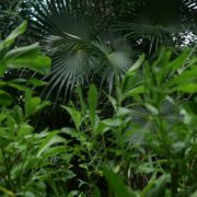 Mexcican-cancun-nature-grass-palms-herbs-view-in-4K_005 National Footage