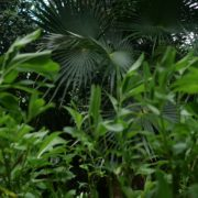 Mexcican-cancun-nature-grass-palms-herbs-view-in-4K_006 National Footage