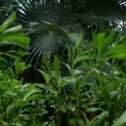 Mexcican-cancun-nature-grass-palms-herbs-view-in-4K_008 National Footage