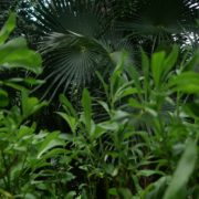 Mexcican-cancun-nature-grass-palms-herbs-view-in-4K_009 National Footage