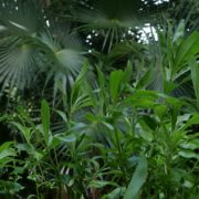 Plam-tropic-view-herbs-and-grass-in-4k-footage_001 National Footage