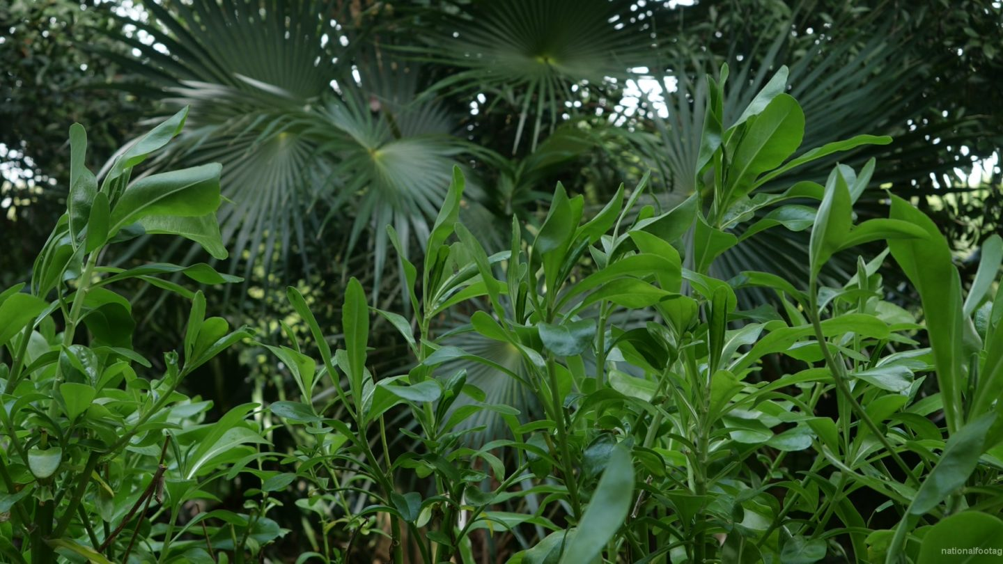 vj video background Plam-tropic-view-herbs-and-grass-in-4k-footage_003