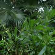 Plam-tropic-view-herbs-and-grass-in-4k-footage_004 National Footage