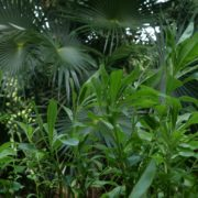 Plam-tropic-view-herbs-and-grass-in-4k-footage_005 National Footage
