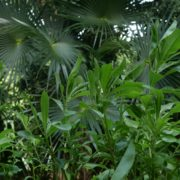 Plam-tropic-view-herbs-and-grass-in-4k-footage_006 National Footage