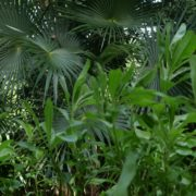 Plam-tropic-view-herbs-and-grass-in-4k-footage_007 National Footage