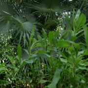 Plam-tropic-view-herbs-and-grass-in-4k-footage_008 National Footage