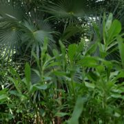 Plam-tropic-view-herbs-and-grass-in-4k-footage_009 National Footage