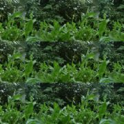 Plants-tropic-nature-video-decoration-herb-4k-view National Footage