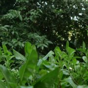 Plants-tropic-nature-video-decoration-herb-4k-view_001 National Footage