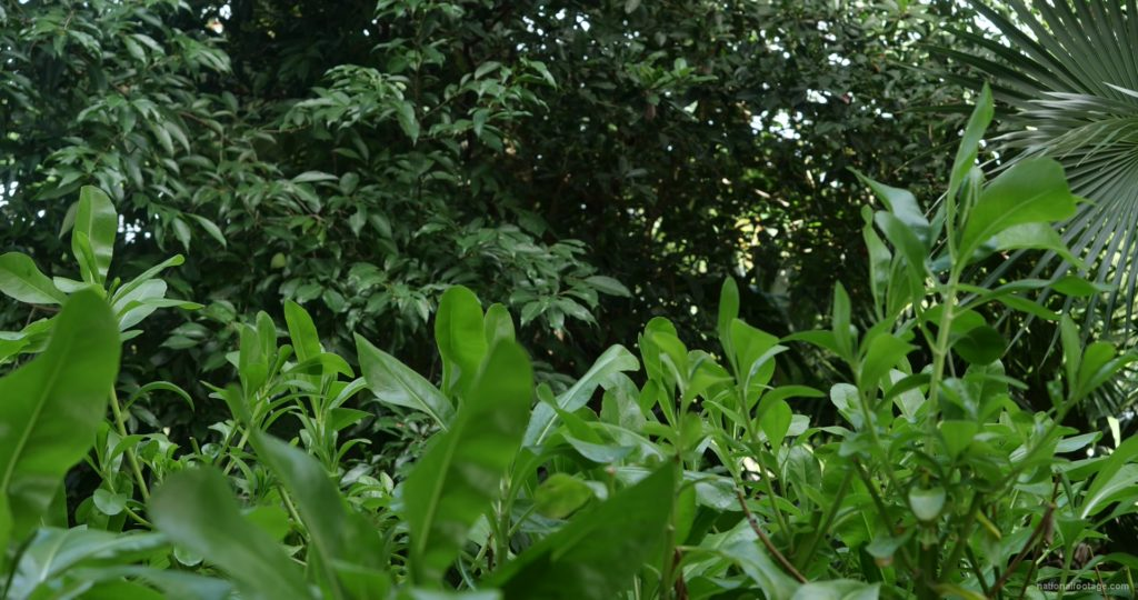 Plants-tropic-nature-video-decoration-herb-4k-view_002 National Footage