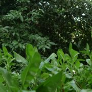 Plants-tropic-nature-video-decoration-herb-4k-view_004 National Footage