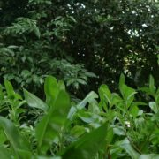 Plants-tropic-nature-video-decoration-herb-4k-view_005 National Footage