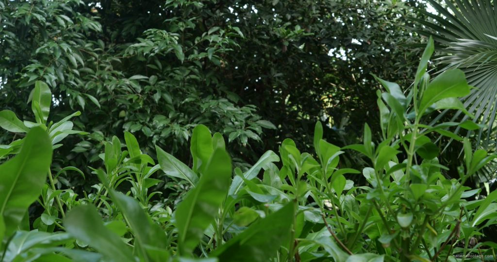 Plants-tropic-nature-video-decoration-herb-4k-view_006 National Footage