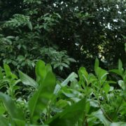 Plants-tropic-nature-video-decoration-herb-4k-view_008 National Footage