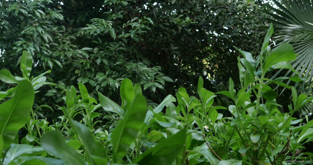 Plants-tropic-nature-video-decoration-herb-4k-view_009 National Footage
