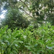 vj video background Tropic-landscape-with-grass-and-tree-on-background-4k-footage_003