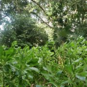 Tropic-landscape-with-grass-and-tree-on-background-4k-footage_004 National Footage