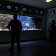 vj video background Amazing-Breathtaking-Aquarium-Terra-Zoo-Haus-des-Meeres-in-Vienna-Austria-Full-HD-Video-Footage_003