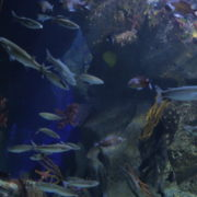 vj video background Amazing-Excursion-To-the-Giant-Aquarium-Terra-Zoo-Haus-des-Meeres-in-Vienna-Austria-4K-Video-Footage_003