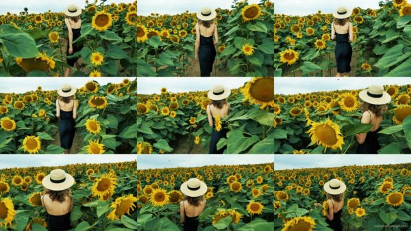 Blonde-Girl-goes-slow-motion-to-the-Sun-Flower-Field National Footage
