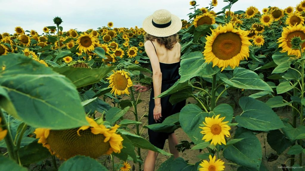 Blonde-Girl-goes-slow-motion-to-the-Sun-Flower-Field_001 National Footage