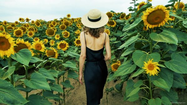 Blonde-Girl-goes-slow-motion-to-the-Sun-Flower-Field_002 National Footage