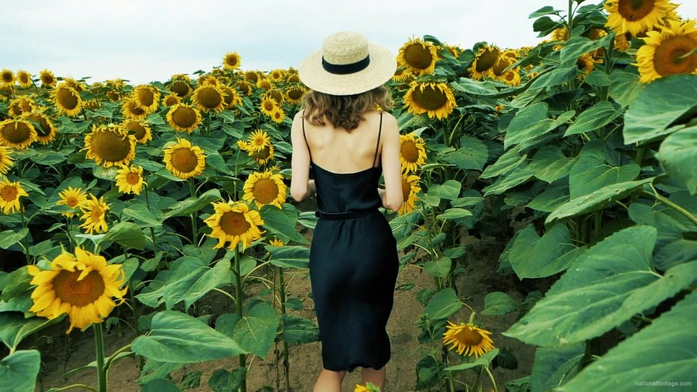 vj video background Blonde-Girl-goes-slow-motion-to-the-Sun-Flower-Field_003