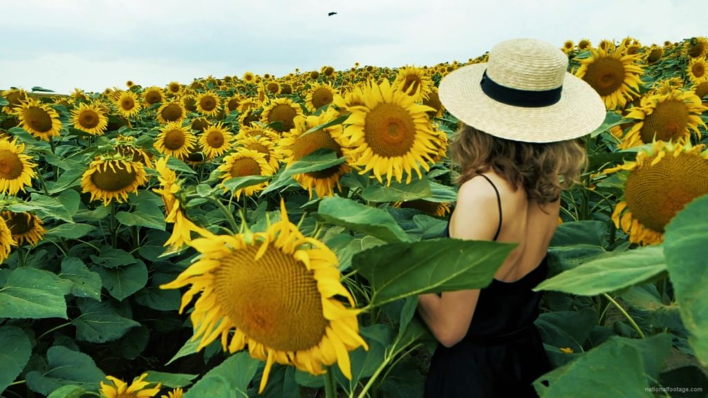 Blonde-Girl-goes-slow-motion-to-the-Sun-Flower-Field_006 National Footage