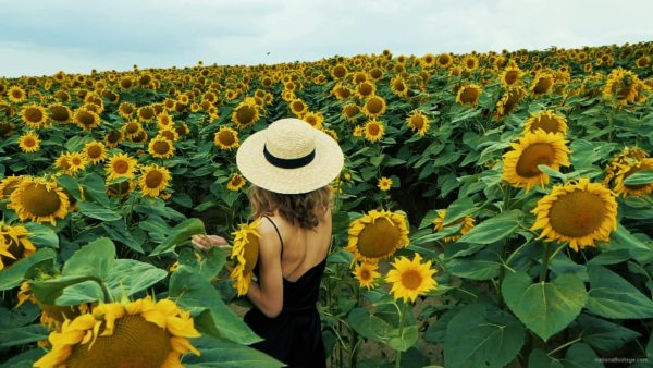 Blonde-Girl-goes-slow-motion-to-the-Sun-Flower-Field_009 National Footage