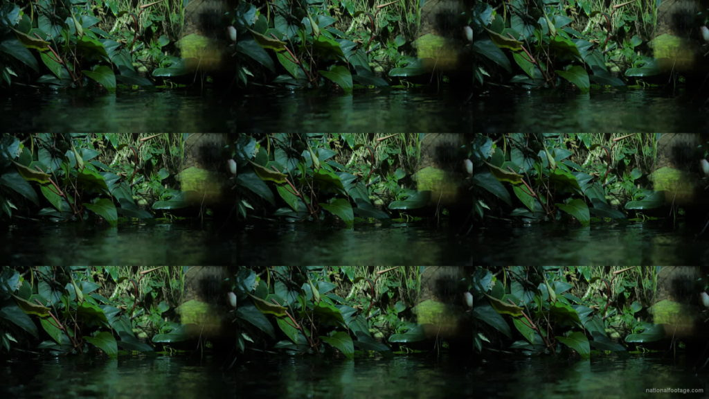 Calm-Water-Light-Green-Beautiful-Tropical-Plant-Video-Background-For-Theatre-Stage-Decoration-4K-Video-Footage National Footage