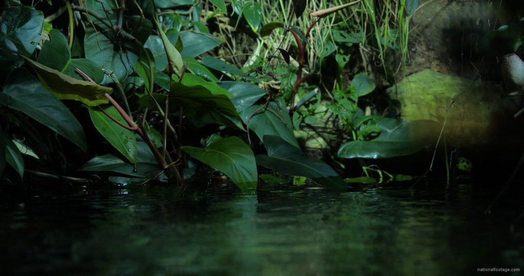 Calm-Water-Light-Green-Beautiful-Tropical-Plant-Video-Background-For-Theatre-Stage-Decoration-4K-Video-Footage_001 National Footage