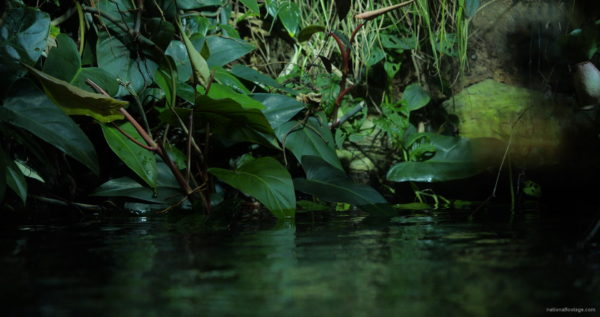 Calm-Water-Light-Green-Beautiful-Tropical-Plant-Video-Background-For-Theatre-Stage-Decoration-4K-Video-Footage_002 National Footage
