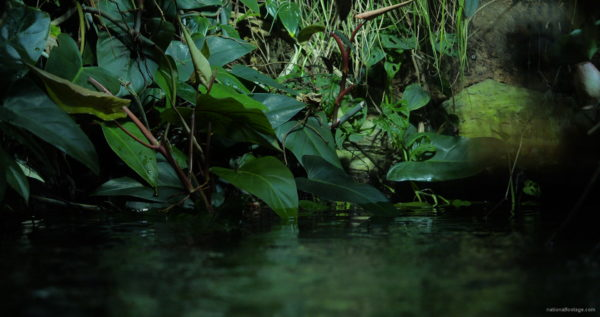 Calm-Water-Light-Green-Beautiful-Tropical-Plant-Video-Background-For-Theatre-Stage-Decoration-4K-Video-Footage_004 National Footage