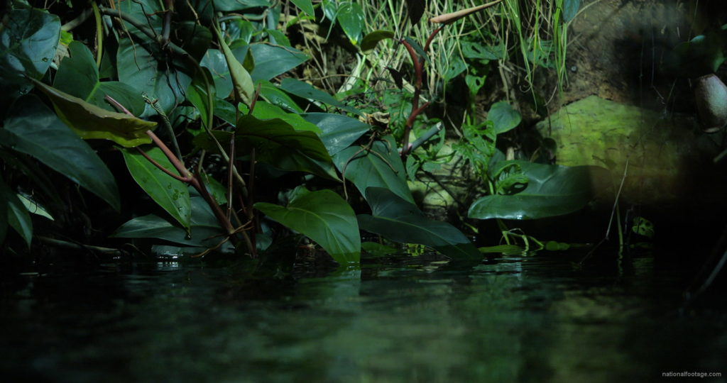 Calm-Water-Light-Green-Beautiful-Tropical-Plant-Video-Background-For-Theatre-Stage-Decoration-4K-Video-Footage_006 National Footage