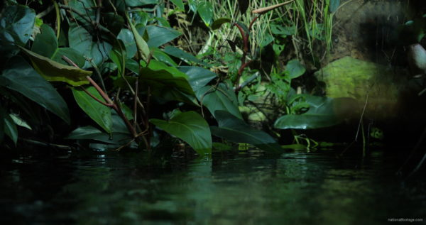 Calm-Water-Light-Green-Beautiful-Tropical-Plant-Video-Background-For-Theatre-Stage-Decoration-4K-Video-Footage_007 National Footage