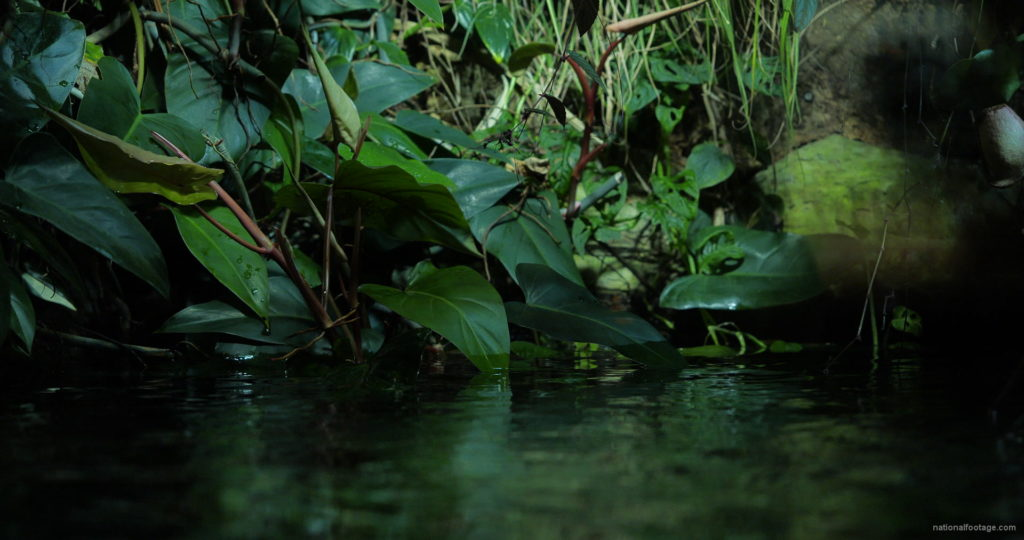 Calm-Water-Light-Green-Beautiful-Tropical-Plant-Video-Background-For-Theatre-Stage-Decoration-4K-Video-Footage_008 National Footage
