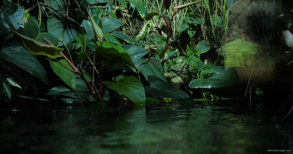 Calm-Water-Light-Green-Beautiful-Tropical-Plant-Video-Background-For-Theatre-Stage-Decoration-4K-Video-Footage_009 National Footage
