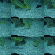 Deep-Seet-Green-Fishes-Video-Background-For-Theatre-Stage-Decoration-4K-Video-Footage National Footage