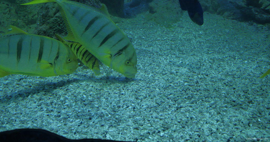 Deep-Seet-Green-Fishes-Video-Background-For-Theatre-Stage-Decoration-4K-Video-Footage_001 National Footage