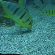 Deep-Seet-Green-Fishes-Video-Background-For-Theatre-Stage-Decoration-4K-Video-Footage_004 National Footage