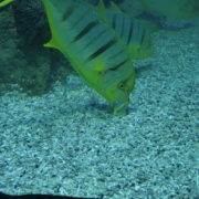 Deep-Seet-Green-Fishes-Video-Background-For-Theatre-Stage-Decoration-4K-Video-Footage_005 National Footage